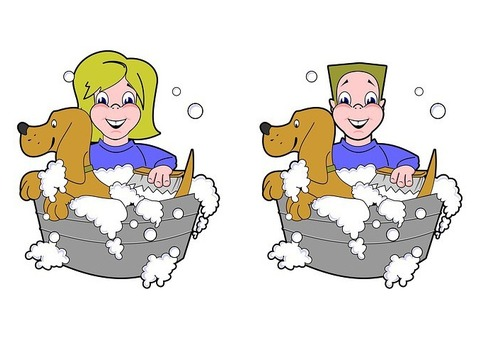Professional Dog Wash Greenvale