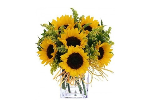 Order  Beautiful & fresh yellow sunflowers