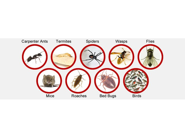 Pest Inspection Specialist Ranger Pest Control In Emerald - 4/5